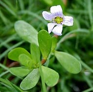 Protandim pret antioxidant natural bacopa floare Protandim Romania
